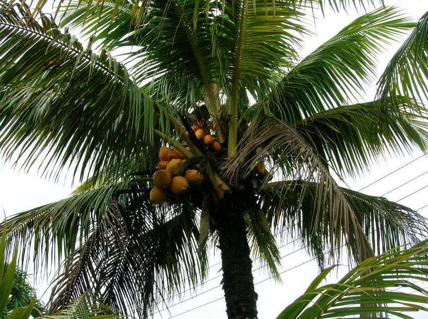Suriname (Algemeen)